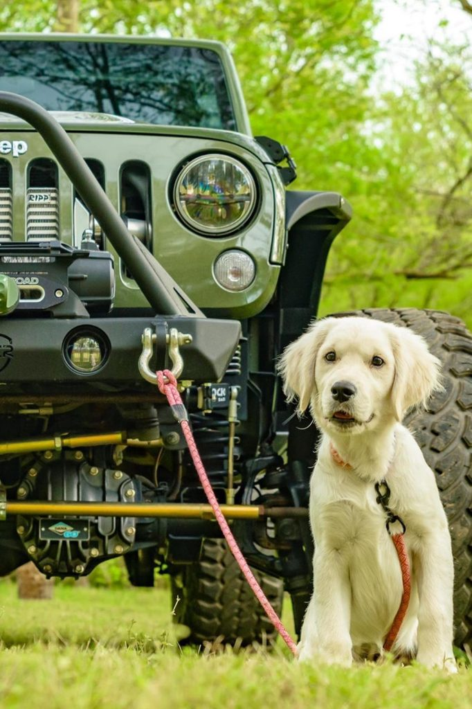 Jeep and a white dog